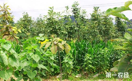 紫油厚朴成高山扶贫花 实现山区农民就地转移就业25.5万人