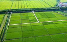十八大以来全国累计建成高标准农田4.8亿亩 新增耕地2400多万亩