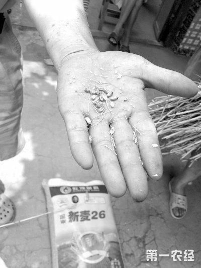 河南方城:农资市场监管乏力 农民买种子像押宝