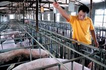 <b>猪场常用几种消毒方式介绍</b>