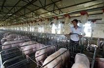 猪场水质出现问题怎么办?如何解决猪场水质问题