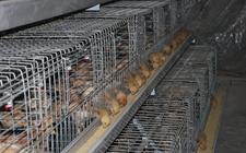 鸡舍常见必备的饲养设备有哪些?