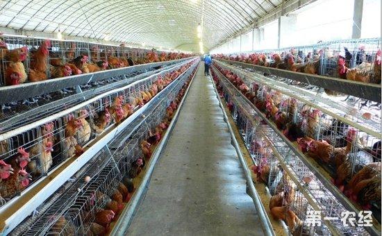 养鸡场建设需遵循哪些取向原则?