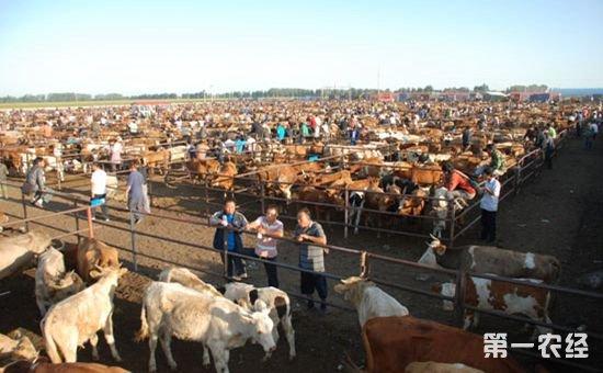 明年养殖业变化:养殖门槛提高 同时补贴力度加大