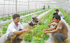 广西南宁:巩固和完善强农惠农政策 使广大农民享受到产业发展的成果