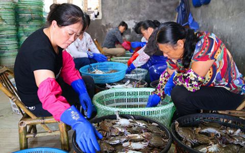 浙江玉环:梭子蟹横行各地 渔民喜获丰收
