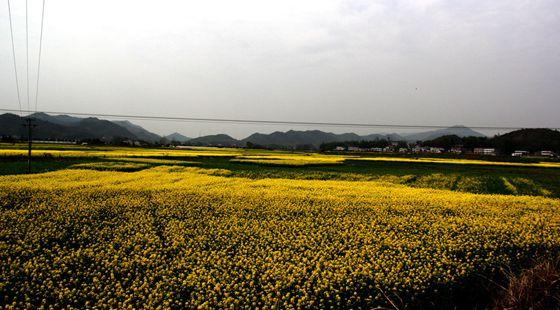湖南省扎实推进农业供给侧结构性 农业农村发展大面基本稳定
