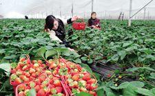 传统农业要转型升级 政府要适应新角色