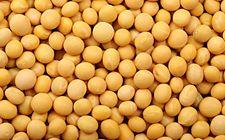 今年大豆上市初期价格低于上年同期且跌速较快