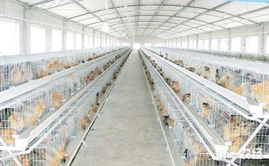 秋冬季如何准确打造鸡舍良好生存环境?