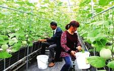 """湖北:科研机构""""牵手""""农企促进农业增效"""