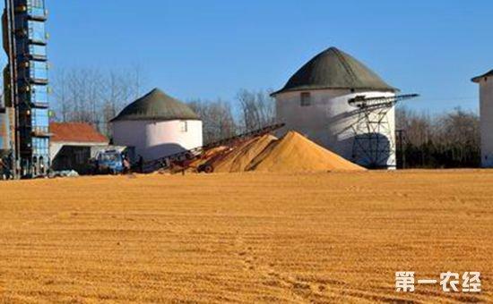 内蒙古农发行已备足100亿元信贷资金 支持今年秋粮收购