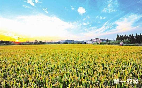 安徽省安排财政农发资金9.88亿元进行农业综合开发 取得阶段性成效