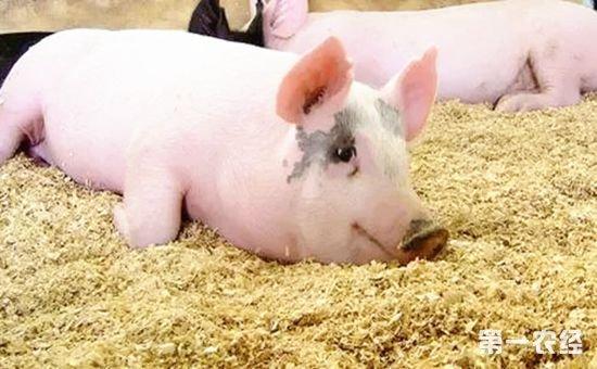 注意!生态养猪迎来新补贴 金额高达25万