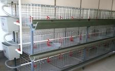 新型结构鸡笼养鸡设备有什么优势?