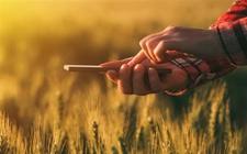 湖北三位农民用手机玩转农业 便利生活增收致富