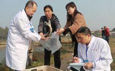 湖北武汉:加大监测力度 重点抽检水产品