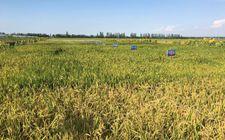 重庆市四家单位被认定为2017年度全国农业农村信息化示范基地