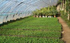 农业种植合作社以及农村合作社补贴政策都有哪些?