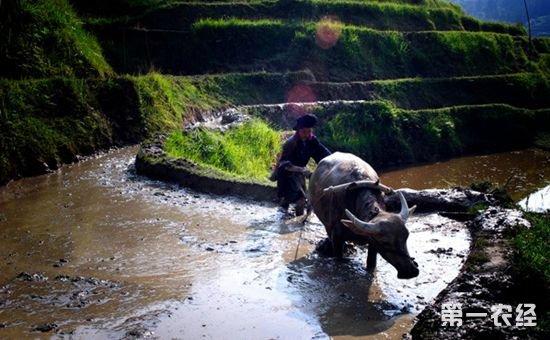 研究表明:改良农业耕作方法可以改善生态环境减缓气候变化