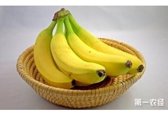 乌克兰香蕉进口创新高 与去年同比增长25%