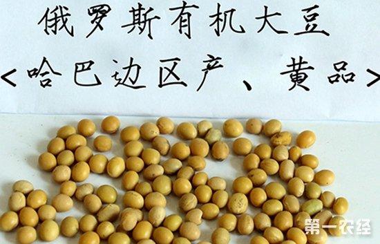 坦桑尼亚将放开玉米出口 俄罗斯大豆或将进入中国市场