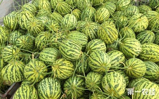 河南万邦水果价格整体上涨 花蕾甜瓜上涨趋势明显