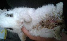 <b>如何治疗兔疥癣</b>