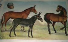 马驴骡秋季常见病有哪些?如何进行防治?