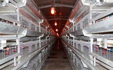 现代化新型养鸡设备有哪些特色?