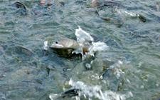 淡水养鱼需要注意什么?淡水养鱼注意事项