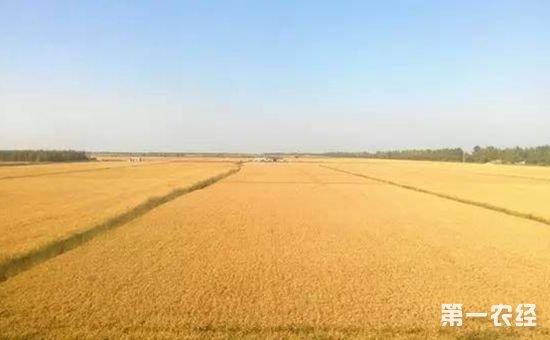 黑龙江佳木斯:在变化中书写着现代农业的壮美画卷