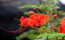 海南将持续大力推广热带花卉产业发展