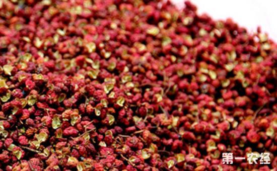 花椒种子怎么种?花椒种子的种植方法