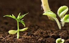 """<b>土壤修复:微生物肥料""""四两拨千斤""""</b>"""