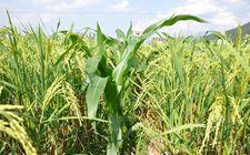 粮食补贴政策改革,哪两种农民可以拿呢?