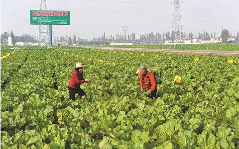 四川省全面启动现代农业产业融合示范园区建设 已取得初步成效