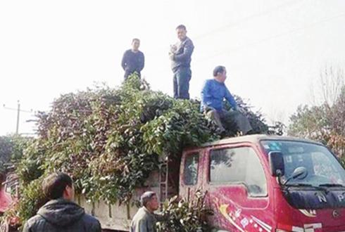 """王书林:为农户栽下""""摇钱树"""""""