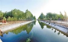 民权县1.28万亩油菜破土出苗 完成黄河故道生态走廊建设