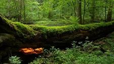 <b>波兰砍伐原始森林被叫停 或将面临巨额罚款</b>
