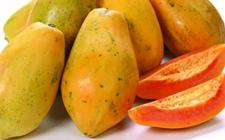 古巴将牵头实施水果增产计划 与联合国及加拿大合作