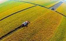 2017年10月份:全国农业农村经济继续向好