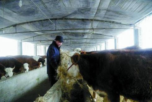 """""""高牛人""""助农增收脱贫 带动村集体经济发展"""
