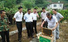 <b>广西蒙山:绿色产业助推脱贫攻坚</b>