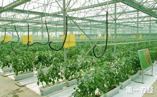 """我国设施农业机械化水平还处在""""初级阶段"""" 亟待升级"""