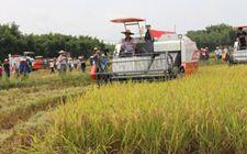 湖南今年晚稻机收亮点凸显 机械化率升至73%