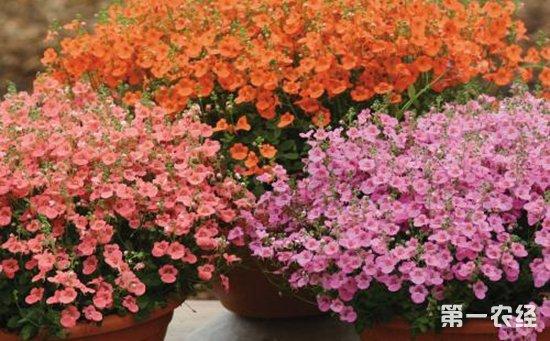 10种小巧精致的盆栽植物介绍!扮靓室内环境就靠它们