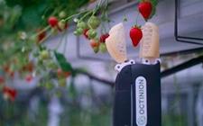 Octinion草莓采摘机器人问世,断了农业工作者的收入?