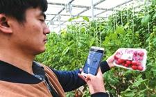 """轻点手机 让高大上的智慧农业""""信号满格"""""""