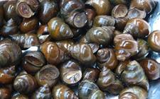 螺蛳的寄生虫有哪些?螺蛳的寄生虫种类介绍